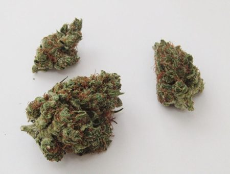 Sour Tangie - Sativa Cannabis